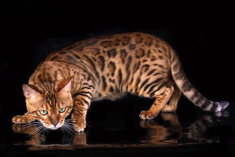 http://grumcat.ru/wp-content/uploads/2012/05/0_56c9a_8a786820_XL1.jpg