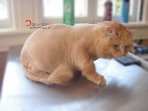 Grooming 007 grumcat